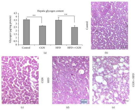 Hepatic glycogen stores declined following carrageenan. (a) Hepatic glycogen was higher in control and HFD groups in blood samples obtained at 50 weeks (P < 0.01; n = 27). (b)–(e) Representative sections of mouse liver stained for glycogen by periodic acid Schiff (PAS) in control (b), carrageenan-exposed (c), HFD alone (d), and HFD + carrageenan-exposed (e) mice after 52 weeks showed more intense staining in control and HFD tissues. Marker = 10 μm; original magnification 100x; CGN = carrageenan; HFD = high fat diet.