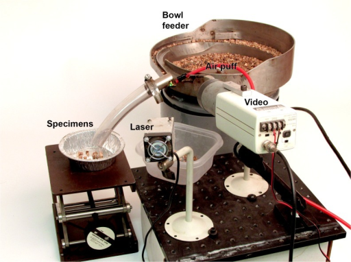Automated fossil sorter.Proof-of-concept prototype automated micro-fossil picker. The feeder bowl guides a stream of matrix under the laser while a video camera detects 'blobs' of a certain size and brightness. Fluorescing fossils are guided down a tube into a tray by a puff of compressed air.