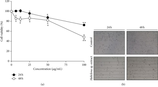 Haliclona sp. extract inhibits cell viability in A549 cells. (a) A549 cells were treated with Haliclona sp. extract for 24 h or 48 h. (b) Haliclona sp. extract (100 μg/mL) was added to the medium. Cells were observed by microscopy (40x magnifications).