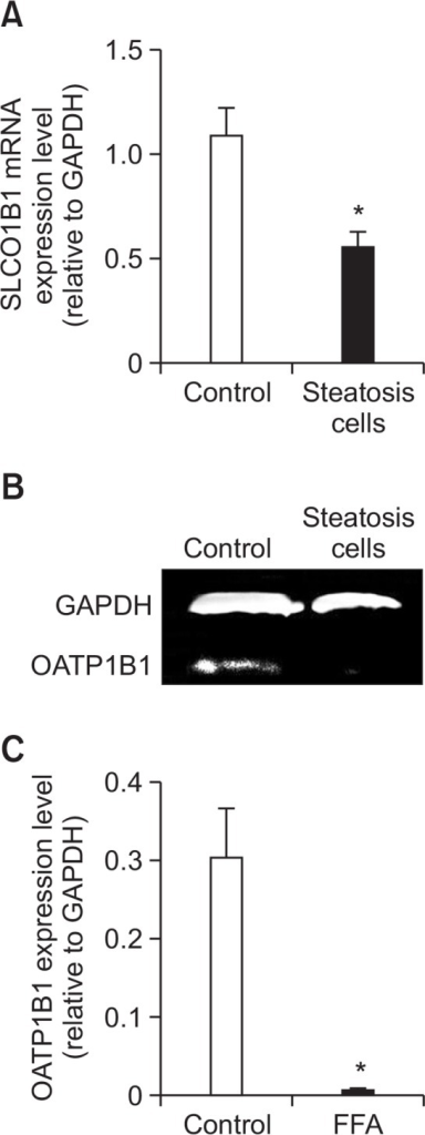 SLCO1B1 mRNA and protein expression in the steatosis cells. (A) The SLCO1B1 mRNA level was determined by real time Q-PCR and normalized with the GAPDH mRNA level. (B) The OATP1B1 protein level was determined using Western blot analysis and normalized with the GAPDH protein level. (C) The gray values of OATP1B1 were measured using Image J software and normalized with GAPDH. The control was treated only with 1% BSA, while steatosis cells were exposed to 1mM FFA for 24 h. Each column represented the mean ± SD of three independent experiments. *p<0.05 versus control.
