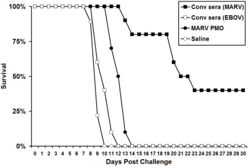 Use of the 'scid-adapted' MARV model to assess the efficacy of potential therapeutics for MARV. Scid mice were infected IP with ~1000 pfu of 'scid-adapted' MARV-Ci67. At 1 h postchallenge, groups of scid mice (n = 10) were treated IP with 1 ml of convalescent serum from guinea pigs that had survived MARV or EBOV challenge. Alternately, groups of mice were treated with 1 mg each of VP24, VP35, NP and L PMOs or saline alone as a vehicle control. The mice were monitored for >70 days for survival and the data are presented on a Meier-Kaplan curve as percent survival for each group.
