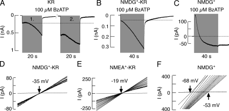 Characterization of the T15A-P2X7R mutant expressed in HEK293 cells. (A) Patterns of current in response to repetitive application of 100 μM BzATP, followed by a washout period of 5 min. (B and C) 100 μM BzATP-induced biphasic response from cells bathed in NMDG+-KR buffer (B) and NMDG+ buffer (C). (D and E) Lack of channel permeability to NMDG+ (D) and NMEA+ (E) when cells were bathed in KR buffer in which all Na+ was substituted with organic cations. (F) A shift in the reversal potential observed during a 40-s application of 100 μM BzATP from cells bathed in NMDG+ medium.