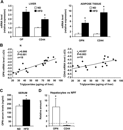 OPN and CD44 mRNA expression is increased in liver and adipose tissue of obese mice. A: OPN and CD44 mRNA expressions were analyzed by real-time quantitative PCR in liver and epididymal white adipose tissue of mice fed a normal diet (ND; n = 8) or HFD (n = 10) for 15 weeks. Data are presented as relative mRNA normalized to 36B4 mRNA and are expressed as means ± SE. B: Correlations between the expression levels of OPN or CD44 mRNA (−ΔCt) and the hepatic triglyceride content were analyzed using Spearman's rank correlation test. *P < 0.05. C: OPN levels were evaluated by ELISA in serum of HFD-induced obese mice (HFD, n = 6) and serum of lean littermates (ND, n = 6). D: Relative expression of OPN and CD44 was analyzed by real-time quantitative PCR in the isolated hepatocytes versus nonparenchymal fraction in the liver of ob/+ mice. Results are expressed as means ± SE of three independent experiments. P values were obtained using the nonparametric Kruskal-Wallis test. *P < 0.05.