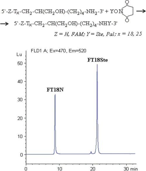Scheme of synthesis and HPLC analysis of fatty acid oligonucleotide conjugates. Fatty acid oligonucleotide conjugate (FT18Ste) was prepared via condensation reaction of FAM-labeled oligomer (FT18N) with stearic acid N-oxysuccinimide. Products were analyzed by using HPLC system equipped with a fluorescent detector (excitation and emission wavelengths were 470 and 520 nm, respectively).