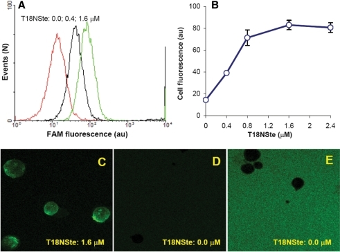 Hybridization of T18NSte integrated into PM with complementary A25F at the cell surface. Jurkat cells were labeled with T18NSte (0.4–2.4 μM) at 37°C for 5 min, washed and incubated with complementary A25F (0.4 μM) at 37°C for 5 min. Then cells were placed in water bath to cool down to 6°C during 20 min time period. (A) Histograms of cell distribution by A25F fluorescence pretreated with T18NSte at the concentration of 0.0, 0.4 and 1.6 μM (red, black and green lines, respectively). (B) Dose dependence of a mean A25F fluorescence intensity detected from cells on T18NSte concentration (n = 3). (C–E) Microphotographs of A25F fluorescence in Jurkat cells pre-incubated with 1.6 μM T18NSte (C) and without T18NSte (D, E). (C, D) Instrumental conditions are similar; (E)—same as (D), but PMT gain is enhanced to demonstrate the presence of unstained cells (dark spots) on the fluorescent background of A25F.