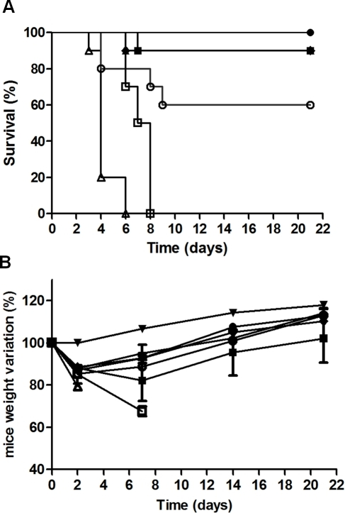 In vivo neutralising activity of anti-ricin antibodies combination administered after ricin challenge.(A) Survival curve. CD1 mice were intranasally challenged with 5 LD50 of ricin alone (Δ) or ricin followed by intravenous injection of 5 mg/kg of antibodies 10 min (▪), 1 h (•), 5 h (♦), 7.5 h (▴), 10 h (○) and 24 h (□) after challenge. (B) Weight change. In the same experiment, mice were weighed at 0, 2, 7, 14 and 21 days, taking the weight at day zero as reference (100%), for female CD1 mice as a control (▾), mice injected with ricin (Δ), or ricin followed by intravenous injection of 5 mg/kg of antibodies 10 min (▪), 1 h (•), 5 h (♦), 7.5 h (▴), 10 h (○) and 24 h (□) after challenge. The data are representative of two independent experiments.