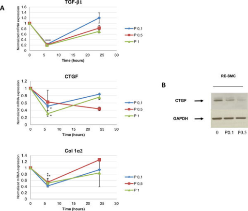 A. Effect of Pravastatin on mRNA expression of TGFβ1, CTGF and Collagen in a kinetic manner: Twenty four hours kinetics of mRNA expression of TGFβ1, CTGF, and Col Iα2 in control and Pravastatin treated cells show that Pravastatin treatment with a dose of 0.1 mM and up reduces levels of mRNAs of these genes with maximum efficiency at six hours post-treatment; C: control, P: Pravastatin treatment. 0.1, 0.5, and 1 refer to treatment dose in mM. *: p < 0.05, **: p < 0.01, ***: p < 0.005 according to kruskal-Wallis test. B.Protein expression of CTGF in control and Pravastatin treated cells: Pravastatin treatment for 24 hours inhibits CTGF protein expression showing also a dose-response relationship. GAPDH is used as a housekeeping gene. C: control, P: Pravastatin treatment. 0.1, 0.5 refer to treatment dose in mM.