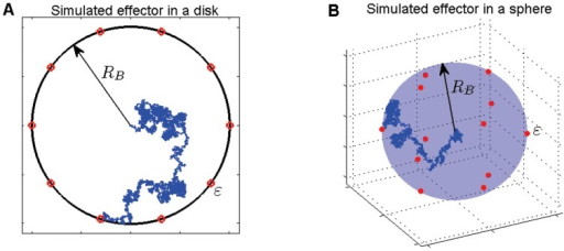 A random trajectory, representing an effector protein's movement, confined to a disk(A) or sphere (B) with radius . The trajectory, assumed to be Brownian here, is shown by the blue trace. The 10 equidistant red circles in panel (A) and 12 red spheres in panel (B) are the target sites, representing the needle complex bases, whose centroids are placed on the boundary of the confining domain. We label their radius by the parameter .