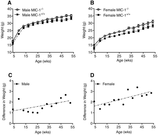 MIC-1−/− are heavier than MIC-1+/+ mice.(A) Male and (B) female MIC-1−/− mice and syngeneic control MIC-1+/+ mice were weighed once every four weeks from age of 4 weeks to 1 year. Both male and female MIC-1−/− mice were on average 6–10% heavier than the MIC-1+/+ mice (male n = 13/group, p = 0.04; female n = 13/group, p = 0.01 repeated measures ANOVA). The weight difference between genotypes appeared from the age of 4 weeks with increased weight differences with ageing in both (C) male and (D) female mice (male n = 13/group, p = 0.044, r2 = 0.32; female n = 13/group p<0.001, r2 = 0.55, linear regression). Data expressed as mean ± SE.