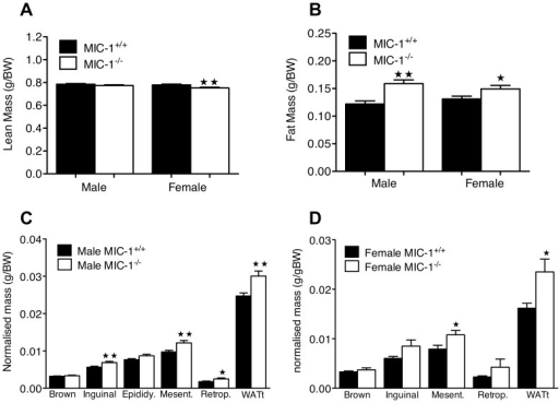 Lack of MIC-1 signaling alters the regulation of body fat depots. (A) Whole body lean mass and (B) fat mass was determined by dual energy X-ray absorptiometry (DXA) in 15 mice per group at 12–14 weeks of age. Female MIC-1−/− mice had lower lean mass relative to control mice (p<0.01, n = 15/group, t-test), Both male and female MIC-1−/− mice had significantly higher fat depot mases compared to synergic control (male p<0.01, female p = 0.04, n = 15/group, t-test). Mass of individual white adipose tissue depots were measured in (C) male and (D) female mice (n = 9/group) aged between 14–16 weeks. Fat masses, namely inguinal, epididymal (Epididy), mesenteric (Mesent), retroperitoneal (Retrop), and total white adipose tissue (WATt) were normalized to body weight. In both male and female MIC-1−/− mice, WATt depots were significantly higher than the synergic control (male p<0.01, female p = 0.02, n = 9/group, t-test). Data are means ± SE. Significance indicated as () for p<0.05 or () for p<0.01.