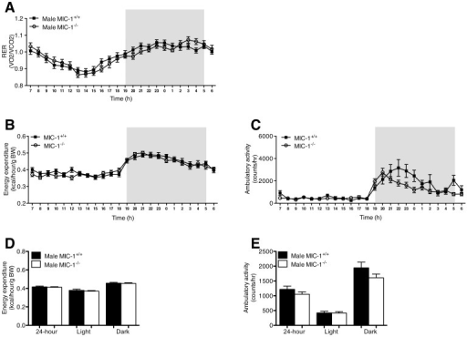 Male MIC−/− mice exhibit similar metabolic activity to their synergic control mice. Metabolic activity of male MIC-1−/− and control mice with groups of 16 at age between 14–16 weeks was determined by time course of (A) respiratory exchange rate (RER), (B) energy expenditure and (C) ambulatory activity. Energy expenditure was adjusted for lean mass via ANCOVA (common lean mass = 25.65 g). (D) Energy expenditure and (E) ambulatory activity were also presented as total for 24 hour, light phase and dark phase. Data are normalized to body weight and plotted as means ± SE.