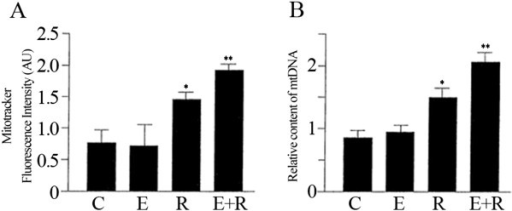 The combined treatment of resveratrol and equol strongly increased the number of mitochondria in HUVEC cells. (A) Mitotracker fluorescent intensities were analysed to assess the mitochondrial biogenesis. (B) Relative mitochondrial DNA (mtDNA) content was estimated by qRT-PCR. Representative data of at least 3 experiments each performed in triplicate. (*= P < 0.05, **= P < 0.01). C: control; E: equol; R: resveratrol; E+R: equol + resveratrol.