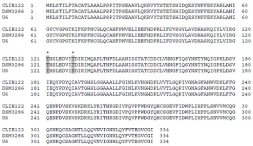 Multiple sequence alignment obtained with the ClustalW program of the extracellular lipase LIP2 from Y. lipolytica strains CLIB122 (GenBank Accession No. XP500282), DSM3286 (GenBank Accession No. ADL57414), and U6 (GenBank Accession No. ADL57415). Asterisks with grey boxes indicate that threonine at the positions 121 and 129 is replaced with isoleucine and serine for the mutant lipase of Y. lipolytica U6 mutant strain in comparison with the native lipase of wild‐type strains.