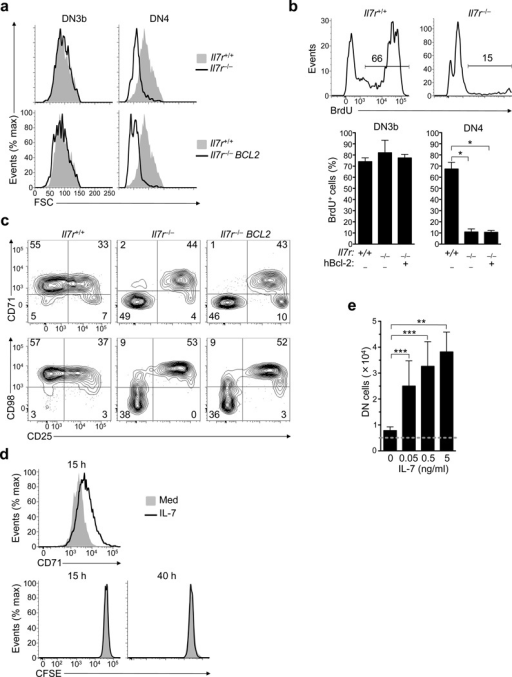 IL-7 signaling promotes DN4 growth and proliferation in vivo.(a) Flow cytometric analysis of forward scatter (FSC), an indicator of cellsize and metabolism, of each subset identified as described in Supplementary Fig. 1.:Il7r+/+ (shaded) versusIl7r−/− (open) (Top).Il7r+/+ (shaded) versusIl7r−/− BCL2 (open) (Bottom).(b) Flow cytometric quantification of BrdU incorporation in DN4 cells (Top)from Il7r+/+ andIl7r−/− mice, assessed 2h after the firstBrdU injection and identified as shown in Supplementary Fig. 1. Bar graphs show % BrdU+ cells(mean +/− SD) in each subset fromIl7r+/+Il7r−/−and Il7r−/−BCL2 mice (Bottom) (3 biological replicates/group). (c) Flowcytometric analysis of CD71 (Top) or CD98 (Bottom) vs CD25 expression, shown as 5%probability contour plots gated on DN CD3 Lin icTCRβ+ thymocytes(d) Histograms show flow cytometric quantification of CD71 expression (Top)or CFSE (Bottom) after WT DN4 thymocytes were cultured in Med (shaded) or IL-7 (open) for15 or 40h. (e) WT DN4 thymocytes (5×103/well, indicated bydotted horizontal line) were cultured with OP9-DL4 cells and media containing theindicated IL-7 concentrations for 48h. Bar graphs show the mean (+/− SD) number ofDN cells recovered (3 technical replicates/group). The significance of differences betweengroups was assessed in (b) and (e) using one-way ANOVA withNewman-Keuls post hoc t-test. Similar results were obtained in 3(a, b, c, e) or 2 independent experiments (d).*P<0.001, **P<0.01,***P<0.05.