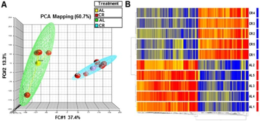 Short-term CR is associated with robust changes in LV gene expression profile.Principal Component Analysis (PCA) depicting overall data. (A) PCA representation of replicates to visualize overall clustering of the microarray gene expression profiles of CR (blue mesh) and Ad lib (green mesh) containing 5 replicate samples (red) in each group. PCA depicts complete separation of overall pattern in CR vs. Ad lib (AL) samples, (B) The genes differentially expressed (upregulated or downregulated in the CR relative to AL) are clustered according to treatment group. The color gradient (red, up-regulation; green, down-regulation) represents normalized gene expression of each gene in all of the samples listed on the right side of each row. The dendrogram on the left shows the grouping of samples based on the similarity of gene expressions amongst them. Samples were clearly grouped according to CR treatment.