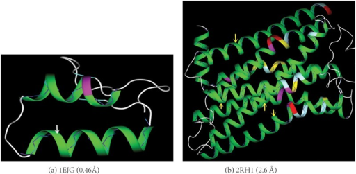 The model accuracy.The spatial differences between the backbone atoms and their closest points on the helix ribbon diagram generated by the model are barely visible (indicated by the arrows) for either (a) an ultra-high resolution protein structure (pdbid 1EJG) or (b) a medium-resolution structure (pdbid 2RH1). The backbones of the helices are shown in stick-and-ball with the diameter of the ball to be the same as the thickness of the ribbon. The Cα atoms are colored in cyan. A detachment occurs when a Cα atom is not positioned inside the ribbon diagram. The larger the difference is between a Cα atom and its closest point on the model, the larger its detachment from the diagram. The protein helix diagrams in both the main paper and Supporting Information (SI) are colored as follows according to residue's helix score (Eq 2): 0.0–20.0 in green, 20.0–50.0 in celeste, 50.0–100.0 in yellow, 100.0–200.0 in magenta, > 200.0 in red. Except for Fig 1, all the figures in both the main paper and SI are prepared using our own molecular visualization program written in C++/openGL/Qt.