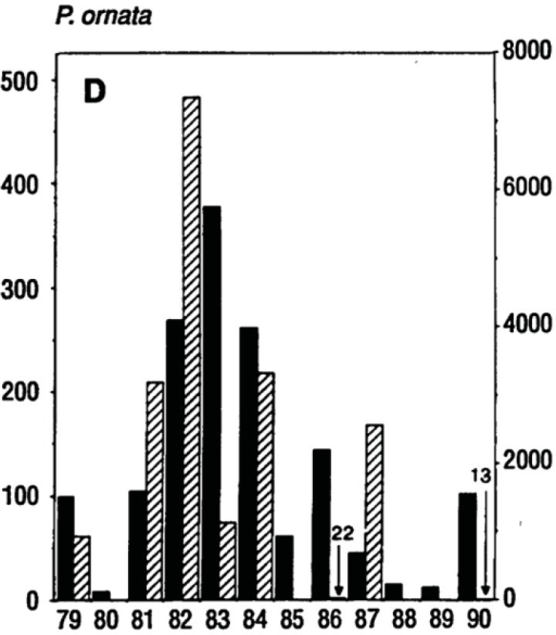 Fluctuation of populations of Pseudacris ornata (a spring breeding anuran) from 1979 to 1990. Solid bars indicate the numbers of breeding females and hatched bars indicate metamorphosing juveniles. The right hand axis shows juvenile numbers. From Pechmann et al. [30].