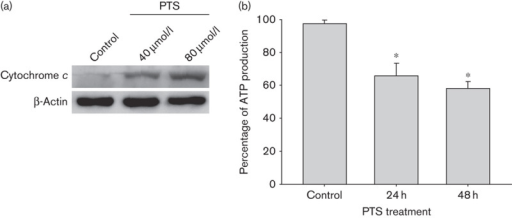 Para-toluenesulfonamide (PTS) induces the release of mitochondrial cytochrome c and inhibits ATP biosynthesis. (a) Western blot analysis of Tca-8113 cells after 40 μmol/l PTS treatment for 1 h. Cytosolic cytochrome c released from mitochondria is shown. β-Actin was used as a loading control. (b) Tca-8113 cells were treated with 40 μmol/l PTS or dimethyl sulfoxide for 24–48 h. The effects of PTS on ATP biosynthesis were assessed by measuring chemiluminescence. Data represent the mean±SD of three independent experiments. *P<0.05.