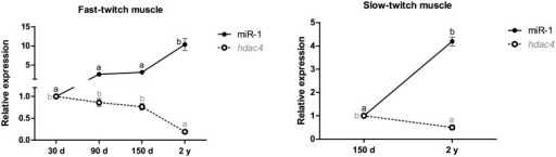 Relative expression of miR-1 and the hdac4 mRNA in fast- and slow-twitch muscles of pacu during growth.miR-1 and hdac4 mRNA expression was assessed by qPCR in pacu skeletal muscle at different development stages: 30-day-old larvae (30 d), 90-day-old juveniles (90 d), 150-day-old juveniles (150 d) and 2-year-old adults (2 y). The slow-twitch muscle was analyzed only in the 150-day-old and 2-year-old pacus, given the difficulty in isolating this tissue in younger animals (30- and 90-day-old pacus). The data are expressed as the fold change compared with the expression level in the fast-twitch muscle in the 30-day-old pacus or the expression level in the slow-twitch muscle in the 150-day-old pacus. The data are presented as the mean ± SEM (n = 6). The different letters indicate significant differences in expression (p<0.05).