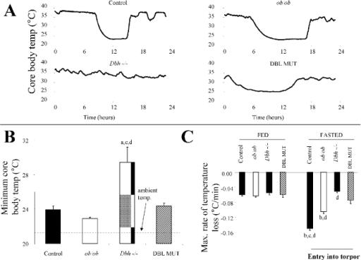 Leptin deficiency restores torpor in Dbh −/− mice (A) T