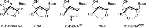 Structures of 2′,4′-BNA/LNA, ENA, 2′,4′-BNANC, PrNA and 2′,4′-BNACOC monomers.