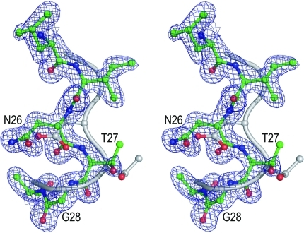 Stereoview of overlay of the active-site (D/N)TG loops of HIV-1 PR (PDB entry 3hvp, grey) and M-PMV PR (green) based on Cα superposition of the entire molecules. The M-PMV PR structure is shown as 2F                  o − F                  c electron density contoured at 1.3σ.