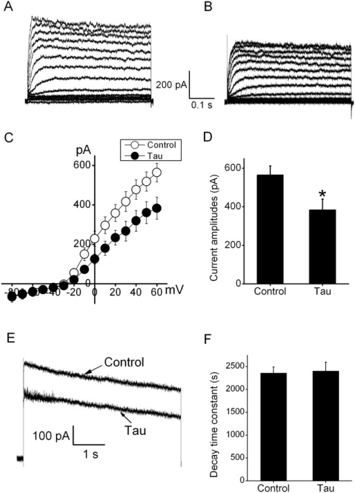 Overexpression of tau inhibited whole-cell currents through Kv channels.(A) The outward Kv currents were evoked by stepped up to +60 mV for 500 ms at a holding potential of -80 mV in N2A cells. (B) These Kv currents were substantially decreased after tau transfection for 48 h. (C) Current–voltage (I-V) relations of outward Kv currents in the control (white circle) and transfection with tau (black circle). (D) The graph showed that statistic analysis of effects of tau overexpression on whole-cell Kv currents (n = 8). *P<0.05 compared with control. (E) Representative current traces in the absence and presence of tau overexpression. (F) The statistic analysis of effects of tau overexpression the decay time constant at +60 mV (n = 9). *P>0.05 compared with control.