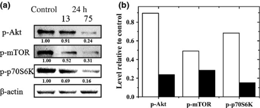 The PI3K/Akt signaling pathway was effectively depressed by carbon ions with different linear energy transfer (LET). Protein expression levels at 24 h after irradiation at 2 Gy were detected. (a) Expression levels of phosphorylated (p-)Akt (ser473), p-mTOR (ser-2448), and p-p70S6K (ser235/236). The relative level of proteins in comparison to β-actin is indicated below each immunoblot image. (b) Each band is compared with the individual band density for β-actin. The relative amounts of the proteins were calculated by comparing them with the densities of the corresponding control samples. Black columns indicate the carbon ions with LET of 75 keV/μm; white columns indicate the carbon ions with LET of 13 keV/μm.