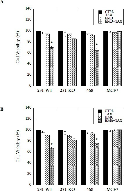 Effect of paclitaxel in combination with NHE1 inhibitors on cell viability of wild type (231-WT) and NHE1-knockout (231-KO) MDA-MB-231 cells, and MDA-MB-468 (468) and MCF7 cellsCells were treated for 24 hours in reduced (0.2%) serum media (stimulated conditions), with 1 nM paclitaxel (TAX), 10 μM EMD87580 (EMD) (A), or 10 nM HMA (HMA) (B), or with both paclitaxel and EMD87580 (ET, A), or paclitaxel and HMA (HT, B) [*P<0.001, + P<0.01, N=5]. Media only control cells (CTRL) were left untreated. Viability was assessed by the catalytic conversion of yellow MTT (3-(4,5-dimethylthiazol-2-yl)-2,5-diphenyltetrazolium bromide) to purple formazan in live cells. Spectrophotometric quantitation of this colorimetric change was recorded as the optical density of the sample at 570 nm, with background subtraction at 630 nm. All data are presented as a ratio of sample means over mean control values for each treatment for each cell type. In 231-KO cells, a significant loss of viability is observed when cells are treated with paclitaxel alone [+ P<0.01, N=5]. In stimulated conditions, both triple-negative MDA-MB-231 and MDA-MB-468 cells showed significantly reduced viability when treated with paclitaxel in the presence of NHE1 inhibitors EMD87580 or HMA [*P<0.001, N=5]. MCF7 cell viability, however, was unaffected by drug treatments.
