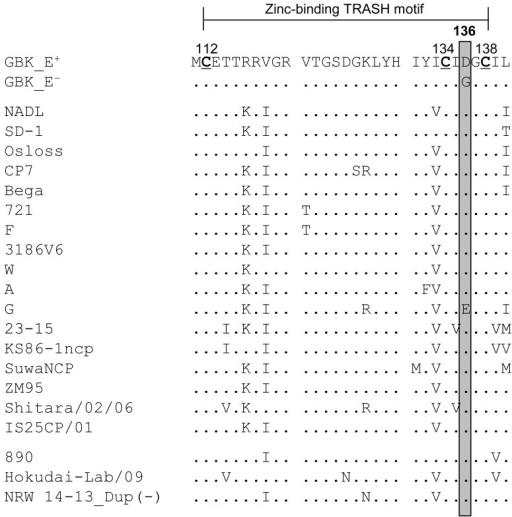 Comparison of amino acid sequences of the zinc-binding TRASH motifs inNpro. The amino acid sequences of the zinc-binding TRASH motifs in theNpro proteins of various BVDV strains deposited in the DDBJ/EMBL/GenBankdatabases were compared with those of GBK_E+ and GBK_E−. Atleast one strain per subgenotype [1a−1o (except for 1l) and 2a−2c]was chosen. The cysteines (Cs) at positions 112, 134 and 138 of the zinc-binding TRASHmotif are highlighted in bold and underlined. The amino acid residue at position 136is boxed in gray. The accession numbers of strains from the DDBJ/EMBL/GenBank are asfollows: NADL (M31182), SD-1 (M96751), Osloss (M96687), CP7 (U63479), Bega (AF049221),721 (AF144463), F (AF287284), 3186V6 (AF287282), W (AF287290), A (AF287283), G(AF287285), 23-15 (AF287279), KS86-1ncp (AB078950), SuwaNCP (KC853440), ZM-95(AF526381), Shitara/02/06 (AB359930), IS25CP/01 (AB359931), 890 (U18059),Hokudai-Lab/09 (AB567658) and NRW 14-13_Dup (−) (HG426485).