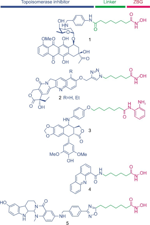 Pharmacophoric features of dual inhibitors against histone deacetylases and topoisomerases and their chemical structures. ZBG, zinc binding group.