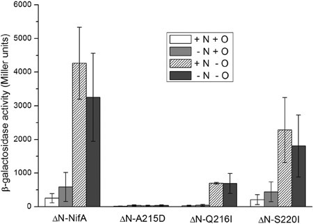 Transcriptional activity of ΔN-NifA mutant proteins in Escherichiacoli JM109 (DE3) carrying pRT22 (nifH::lacZ). ΔN-NifAindicates NifA lacking 203 amino acid residues at the N-terminal GAF domain.ΔN-215D, ΔN-Q216I, and ΔN-S220I indicate the N-truncated forms of NifA mutants.β-galactosidase expression experiments were performed in NFDM medium supplementedwith 20 mM ammonium chloride (+N) or 0.2% casamino acids (-N) in the presence (+O)or absence (-O) of O2. Data are reported as the mean±SD of 3independent assays. β-galactosidase activity is reported as Miller units.