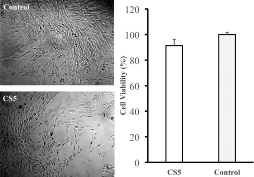 Mammalian cytotoxicity of the CS5 scaffold.Mammalian cell toxicity (or viability for L-929 cells) of the CaCO3 and SiO2 (5/95 by weight composition) scaffold indicated an appropriate safety level based on the ISO 10993–5 method.