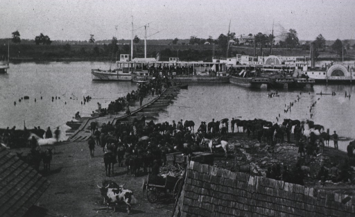 <p>Soldiers and horses at the waterfront at Port Royal.</p>