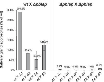 Sporozoite Development in Genetic CrossesGraphical summary of salivary gland sporozoite numbers derived from crosses between wt and Δpblap and amongst Δpblap strains. Values given are mean % of wt (± standard error of the mean). In wt crosses, diagnostic PCR on blood stage infection resulting from mosquito bite confirmed transmission of the Δpblap parasites (not shown). Δlap1 as published in [4]. Please refer to Table S5 for individual data.