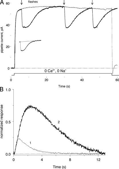 Testing the efficiency of the Ca2+-clamping procedure. (A) Assessing the stability of dark current in 0 Ca2+, 0 Na+ solution. Zero level corresponds to the dark current in normal Ringer, and outward ROS current is plotted upward. Thin line shows changes in the pipette current after jumping the cell into 0 Ca2+, 0 Na+ solution in darkness. After recovery of the dark current, the jump was repeated and the cell was stimulated with three saturating flashes (2,000 R*, marked by arrows) to determine dark current (bold trace). The dark current rose by 15% between the first and second flashes, and then decreased back. 15% change of the dark current indicates the stability of [Ca2+]in within 1.9% (see Results). Inset shows the method for drawing zero level of the response. 2-s pre-flash stretch and 7-s stretch after the response termination are fitted with a cubic parabola (smooth thin line). (B) Assessing the feedback loop gain. Curve 1 is a response to a 13 R* flash recorded in normal Ringer solution. Curve 2 is a response to the same flash in 0 Ca2+, 0 Na+ solution. Ratio of time integrals of the two curves corrected for saturation provides an estimate of gL (see Eq. 8). (A and B) Two different cells.