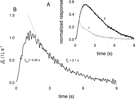 Finding flash-induced PDE activity from photoresponse recorded in Ca2+-clamping solution. (A) Current responses of a rod to the same 10-ms, 13 R* flash applied in normal Ringer (curve 1, average of four responses) and in 0 Na+, 0 Ca2+ solution (curve 2, single response). Responses are normalized to the dark current level present before the flash. (B) The wave of flash-induced PDE activity (noisy curve) calculated from the curve 2 in A using Eqs. 3–5 in the text. Assumed: βdark = 3.4 s−1, ncG = 3. Smooth curve shows an exponential approximation of the recovery phase, starting from 60% maximum downward. Circle marks the half-height of the rising phase.