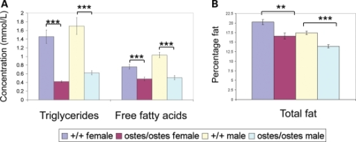 Lipid metabolism in ostes mice. (A) Lipid profiling in ostes/ostes mice. Blood lipids were analysed from fasted ostes/ostes (n = 9 female, 11 male) and wild-type (n = 12 female, 12 male) mice for triglyceride (TG) and free fatty acid (FFA). Both male and female ostes/ostes mice showed significantly decreased levels of both TG and FFA (TG: female: P = 3.107E − 05; male: P = 0.0001; FFA: female: P = 0.0005; male: P = 2.221E − 06). Data represented are mean blood plasma levels ± SEM. (B) Total percentage body fat in ostes/ostes mice. Total body fat was analysed by DEXA analysis in ostes/ostes (n = 9 female, 11 male) and wild-type (n = 22 female, 22 male) mice. Total percentage body fat was significantly decreased in both female and male ostes/ostes mice, compared with wild-type (female: P = 1.922E − 03, male: P = 5.023E − 06). Data represented are mean percentage body fat ± SEM.