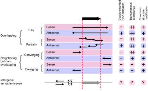 Genomic position of lncRNAs may offer clues to their function. The positional relationship of the lncRNAs (thin arrows) compared to the transcript they regulate (thick arrow) is shown. Serrated lines indicate the long distance between the intergenic lncRNAs and the nearest known transcript, which they may or may not regulate. The three major functional mechanisms employed by currently characterized lncRNAs are listed to the right, and the likelihood that each strategy is used is shown by: - (unlikely to be used), + (likely to be used) or ++ (very likely to be used) signs.