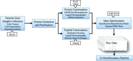 A schematic diagram for a proteomics workflow. A typica | Open-i