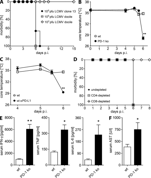 PD-1 KO mice develop fatal CD8 T cell–dependent pathology during early systemic LCMV infection. (A) PD-1 KO mice were infected with 106 pfu LCMV clone 13, 106 pfu LCMV docile, or 102 pfu LCMV docile and monitored for morbidity (hunched back, ruffled fur, and reduced motoric activity). (B and C) Core temperatures were measured in WT and PD-1 KO mice (B), untreated and αPD-L1–treated WT mice (C). (D) Morbidity was monitored in undepleted and CD8 T cell– or CD4 T cell–depleted PD-1 KO mice at the indicated times after infection with 106 pfu LCMV docile. (E) Cytokine concentrations in the sera of WT and PD-1 KO mice were analyzed on day 6 after 106 pfu LCMV docile infection. A–E: n = 3–4 mice per group. Means ± SEM from one representative of two experiments are shown. (F) Liver AST concentrations in the sera of WT and PD-1 KO mice were determined on day 6 after infection. WT, n = 8 mice; KO, n = 7 mice. Means ± SEM from two pooled experiments are shown. *, P < 0.05; **, P < 0.01 (unpaired two-tailed Student's t test).