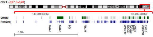 Schematic of X chromosome and genes in the Xq27.3-q28 region. Region of deletion is highlighted by the red box. Shown are the OMIM-disease associated genes in green and all RefSeq genes in blue within the deletion region of 144,270,614-154,845,961 bp (hg19). Image was adapted from http://genome.ucsc.edu/cgi-bin/hgTracks.