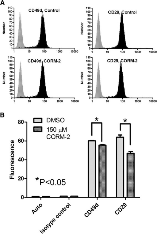 Effect of CO donor on surface expression of VLA-4 (CD49d/CD29 heterodimer). U937 cells were treated with vehicle (DMSO, control), and CO donor (150 μM CORM-2) for 30 min at 37°C. Next, cells were placed on ice and stained with primary labeled anti-CD29 and anti-CD49d antibodies, or the isotype control. A. Histograms of anti-CD29 and anti-CD49d antibodies are shown in black, and the isotype control is grey. B. Bar graphs of mean channel fluorescence (MCF) ± SEM (n =5) for unstained cells (autofluorescence), nonspecific binding to cells (isotype control), cells treated with vehicle (DMSO), and cells treated with CORM-2 are shown (10,000 gated events for each sample were collected). One representative experiment of three experiments is shown. * indicates means are significantly different (P <0.05) as estimated by the unpaired t test analysis using GraphPad Prism software.