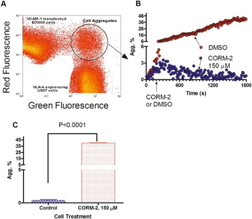 Effect of CO donor on cell adhesion between U937 cells and VCAM-1-transfected B78H1 cells. A. Dot plot of flow cytometric analysis of cell aggregation. Cells were labeled with red and green fluorescent dyes. Next, cells were mixed at 0 time point. During data acquisition samples were maintained at 37°C, and continuously stirred with a magnetic stir bar. An increase in the number of aggregates was detected as green and red co-fluorescent particles indicated by the circular gate. B. Real-time cell aggregation plotted as % aggregates (Agg, %) versus time. The data were normalized to the non-specific aggregation determined as cell aggregation in the presence of excess unlabeled competitor (1 μM LDV). A representative experiment out of two experiments is shown. C. Statistical significance of the CO donor effect on cell aggregation. The aggregate percentage data from the last 5 min of the experiments (B) are compared using the unpaired t test. Means are significantly different (P < 0.05).