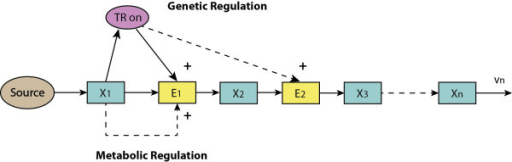 The initial-product module with gene-expression and metabolic regulation.