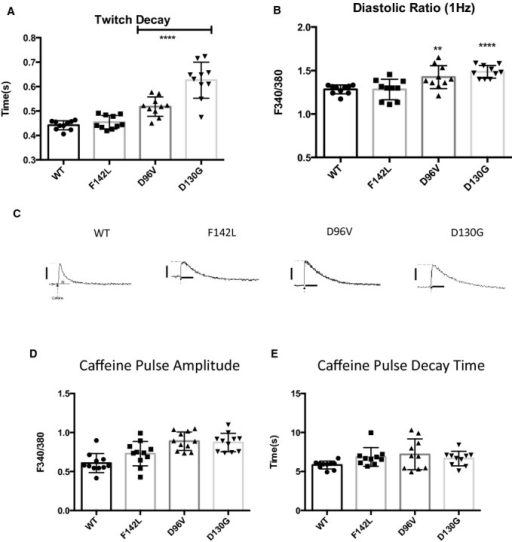 LQT‐CaM Long QT calmodulin (CaM) slows Ca2+ reuptake but does not alter sarcoplasmic reticulum Ca2+ load. A, The mean stimulated twitch decay rate is progressively slowed in rank order of Ca2+‐CaM affinity. Relatively low Ca2+‐affinity D96V and D130G‐CaM show a significantly slower decay rate for 1‐Hz stimulation. ****P<10−4. n=10. B, The mean diastolic Ca2+ ratio is progressively elevated in rank order of Ca2+‐CaM affinity. Relatively low Ca2+‐affinity D96V and D130G‐CaM show a significantly slower decay rate for 1‐Hz stimulation. **P<0.01; ****P<10−4. n=10. C, Representative caffeine‐induced Ca2+ transients. Scale bars: y‐axis: 0.5 F340/F380 units; x‐axis: 5 s. D, Sarcoplasmic reticulum Ca2+ is not significantly different between WT CaM and long QT CaMs. E, Caffeine‐induced Ca2+‐transient decay rate is not significantly different, suggesting no change in NCX function. WT indicates wild type.