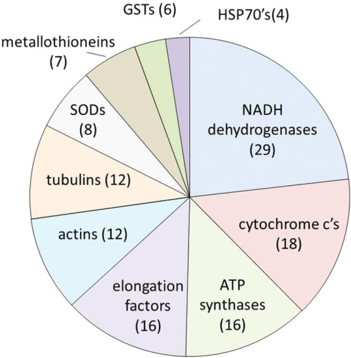 "The ten most common differentially expressed genes identified by ""name"" (comprising more than one accession number) in oysters exposed to 10 different types of environmental stressors.Numbers in brackets represent the number of times this gene name appeared as differentially expressed in all of the different stress treatments. These data do not include genes encoding ribosomal proteins."