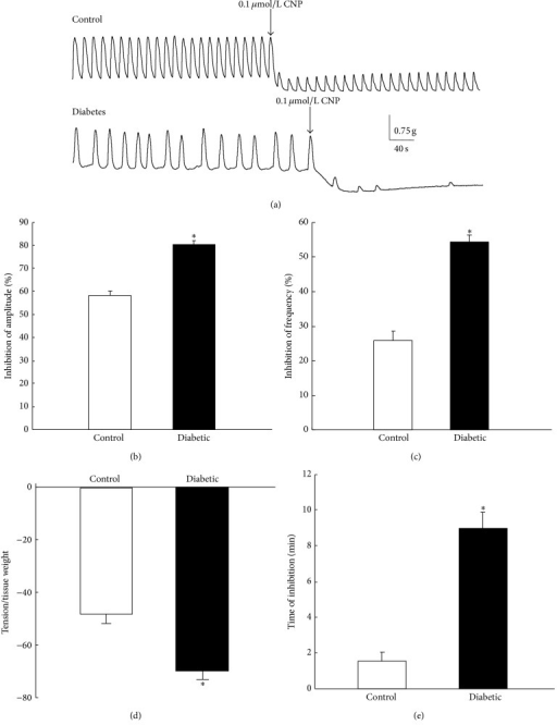 Effect of CNP on the spontaneous contraction of gastric antral smooth muscle in control and diabetic rats. (a) CNP significantly inhibited the spontaneous contraction of gastric antral smooth muscle in both control and diabetic rats. (b) CNP caused significantly more inhibition on the amplitude of the contraction in diabetic rats than in controls (n = 8, P < 0.01). (c) CNP caused significantly more inhibition on the frequency of the contraction in diabetic rats than in controls (n = 8, P < 0.01). (d) CNP decreased the basal tension, which was more significant in diabetic rats than in controls (n = 8, P < 0.01). (e) The duration of CNP-induced inhibition of gastric smooth muscle contraction was significantly longer in diabetic rats than in controls (n = 8, P < 0.01).