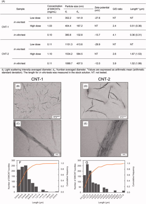 Characterization of SWCNTs dispersed in working solutions. Characterization of SWCNTs in working solutions for in vivo and in vitro tests (A). TEM images of SWCNTs in CNT-1 (B and C) and CNT-2 (D and E) in working solutions for in vivo (high dose) studies. High-magnification micrographs (C and E). Distribution of SWCNT length in working solutions for in vivo (high dose) evaluation by digital TEM images (F and G).