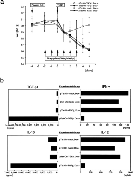 Effect of intranasal pTet-On-TGF-β1 administration on TNBS-induced colitis. (a) Weight changes of mice groups administered intrarectal TNBS and intranasal pTet-On-TGF-β or pTet-On-mock (control plasmid) with or without Dox (i.p.) Each group, n = 10. (b) LP cells from mice 5 d after TNBS colitis induction were stimulated and cultured for ELISA assays of TGF-β1, IFN-γ, IL-10, and IL-12. As shown, LP cells from mice administered Dox plus pTet-On-TGF-β1 produced large amounts of TGF-β1 and IL-10 and exhibited suppressed IL-12 and IFN-γ production. Data shown is representative of three independent experiments.